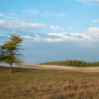 Lonely tree in a countryside — Stockfoto