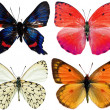 Collection of butterflies isolated on white — Stock Photo #4080414