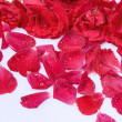 Roses petals as background — Foto Stock