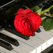 Red rose over piano key — Stock Photo