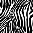 Stock Photo: Zebra as pattern