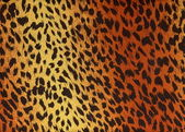 Leopard fur as background — Stock Photo