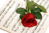 Rose over musical note — Stock Photo