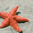 Starfish over sand on beach — Stock Photo