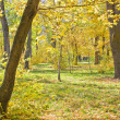 Landscape  park in autumn — Stock Photo