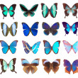 Collection of butterflies isolated on white — Stock Photo #5010167