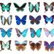 Collection of butterflies isolated on white — Stock Photo