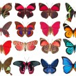 Stock Photo: Collection of butterflies isolated on white
