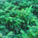 como pano de fundo da pele-árvore — Foto Stock
