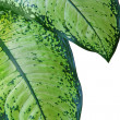 Leaf of fern isolated close up — Stock Photo #5012248