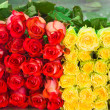 Roses as  backgrounds — Stockfoto