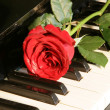 Stock Photo: Rose on piano key