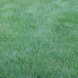 Grass as background — Stock Photo