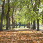 Park landscape in autumn — Stock Photo