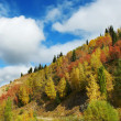 Landscape mountain in  autumn — Stock Photo