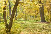 Landschapspark in het najaar — Stockfoto