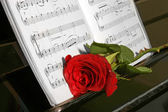 Rose on piano — Stock Photo