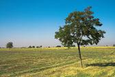 árvore verde em campo — Foto Stock