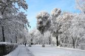 Park krajobrazowy w zimie — Zdjęcie stockowe