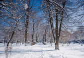 Landscape park in winter — Stock Photo