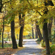 Landscape parfk in autumn — Stock Photo #5092509