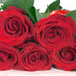 Red roses isolated close up — Stockfoto