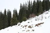 Hiver dans les montagnes — Photo