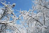 Tempo freddo — Foto Stock