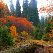 Landscape in autumn — Stock Photo