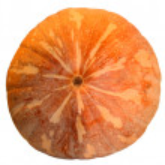 Pumpkin isolated — Stock Photo