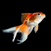 Peixinho — Fotografia Stock