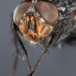 Fly close up — Stock Photo #3999291