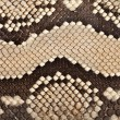 Snake leather texture — Stock Photo