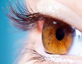 Human eyelashes close up. — Stock Photo