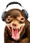 Ridiculous dog DJ. — Stockfoto