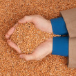 Crop wheat — Stock Photo