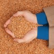 Stock Photo: Crop wheat