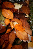 Autumn leaves water — Stock Photo