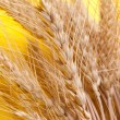 spikelets of wheat — Stock Photo