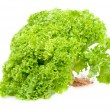 Fresh green lettuce — Stock Photo #4461348