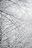Snow on tree — Stock Photo