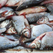 Much fresh river fish. — Stock Photo