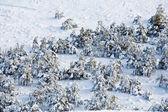冬の木 — ストック写真