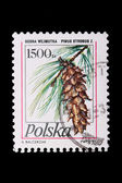 Poland - CIRCA 1978: A stamp pine — Stock Photo