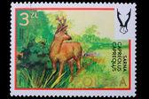 Poland - CIRCA 1973: A stamp chamois — 图库照片