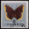 Poland - CIRCA 1967: A stamp - Vanessa antiopa - Stock Photo
