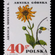 Poland - CIRCA 1972: A stamp - Arnica montana — Stock Photo