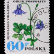 Poland - CIRCA 1972: A stamp - Aquilega Vulgaris — Stock Photo