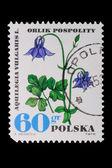 Poland - CIRCA 1972: A stamp - Aquilega Vulgaris — Stock Photo