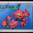 Poland - CIRCA 1972: A stamp - chaenomeles lagenaria — Stock Photo